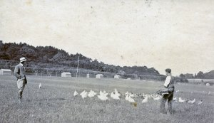 Our Game Farm circa 1920's